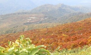 0041.山形県 月山(羽黒口)3