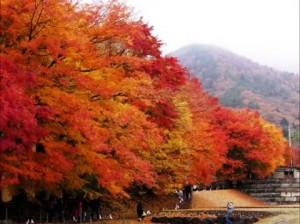 0126.富士山 河口湖もみじトンネル2