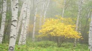 0123.長野県 八千穂高原自然園2