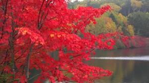 0121.長野県 白駒の池4