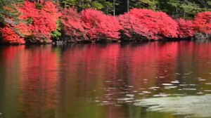 0123.長野県 八千穂高原自然園3