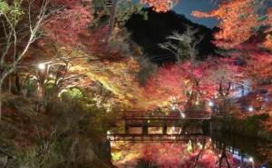 0131.愛知県 岩屋堂公園1
