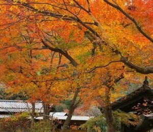 0006.鎌倉の紅葉 瑞泉寺2