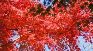 0011.鎌倉の紅葉 浄智寺2