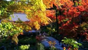 0003.鎌倉の紅葉 円覚寺1
