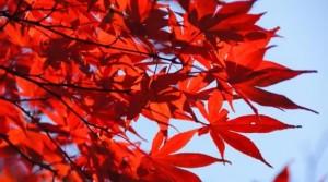 0011.鎌倉の紅葉 浄智寺3