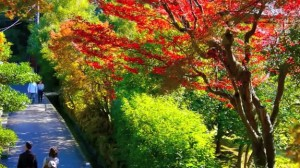 0004.鎌倉の紅葉 建長寺2