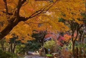 0010.鎌倉の紅葉 明月院3