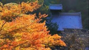 0003.鎌倉の紅葉 円覚寺2