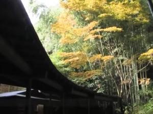 0009.鎌倉の紅葉 報国寺2