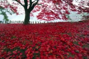 0068.福島県 南湖公園3