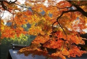 0006.鎌倉の紅葉 瑞泉寺3