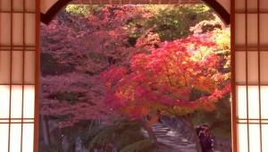 0238.和歌山県 西の丸庭園(紅葉渓庭園)3