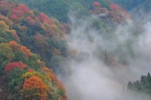 0229.奈良県 吉野山1