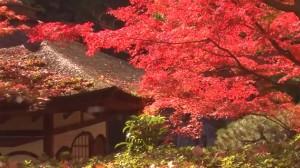 0238.和歌山県 西の丸庭園(紅葉渓庭園)2