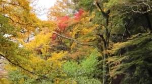 0152.岐阜県 養老公園1
