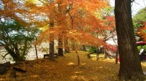0234.福岡県 秋月城跡3