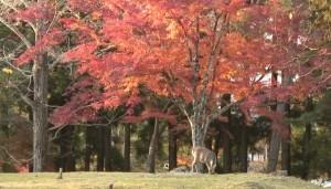 0231.奈良県 奈良公園2