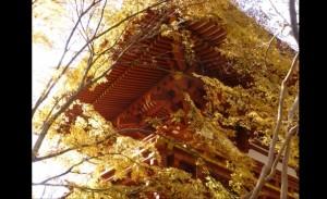 0230.奈良県 室生寺1