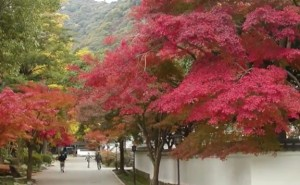 0204.山口県 紅葉谷公園2