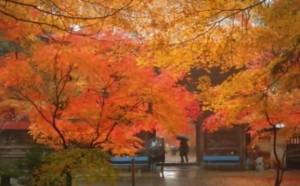0146.岐阜県 大矢田神社4
