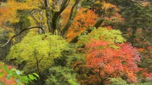 0190.熊本県 菊池渓谷1