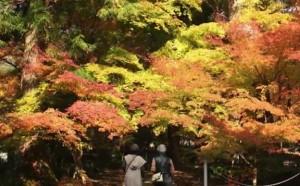 0146.岐阜県 大矢田神社2