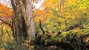 0220.鳥取県 小鹿渓(おしかけい)3