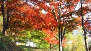 0236.兵庫県 最上山公園(もみじ山)2