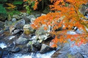 0161.静岡県 河津七滝1