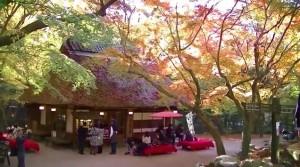0231.奈良県 奈良公園3