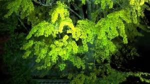 0197.香川県 特別名勝 栗林公園3