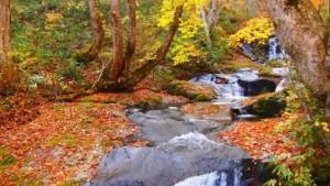 0142.岐阜県 県立自然公園宇津江四十八滝9