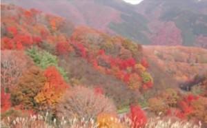 0185.岡山県 蒜山高原(ひるぜんこうげん )1