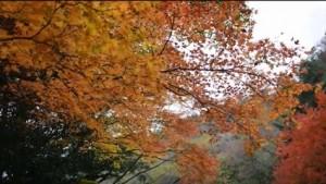 0188.宮崎県 見立渓谷2