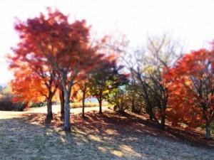 0166.静岡県 田貫湖キャンプ場2