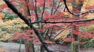 0152.岐阜県 養老公園3