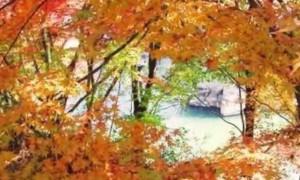 0207.鹿児島県 曽木の滝公園3