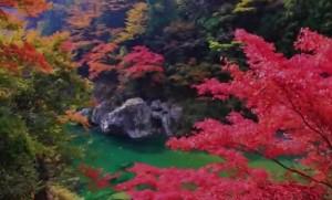 0227.徳島県 祖谷渓1