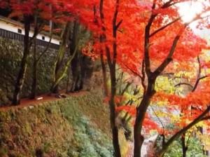 0153.岐阜県 両界山横蔵寺(りょうかいざんよこくらじ )2