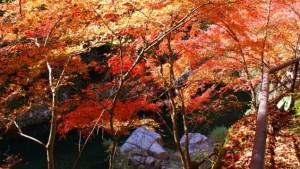 0183.岡山県 奥津渓2