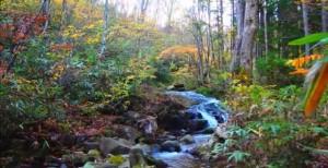 0142.岐阜県 県立自然公園宇津江四十八滝10
