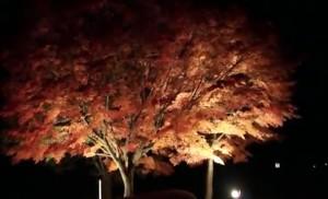 0194.広島県 帝釈峡3