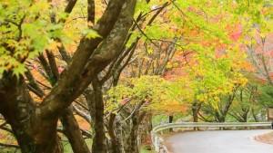 0233.福岡県 英彦山3