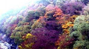 0226.徳島県 高の瀬峡(こうのせきょう)4