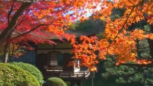 0238.和歌山県 西の丸庭園(紅葉渓庭園)4