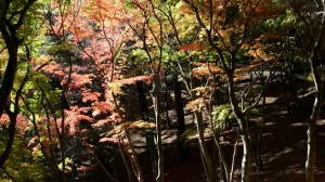 0163.静岡県 修善寺温泉2