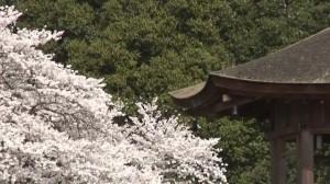 0074.奈良県 奈良公園1