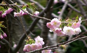 0017.北海道 松前公園2
