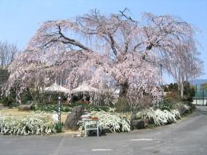 0140.岐阜県 恵那峡3